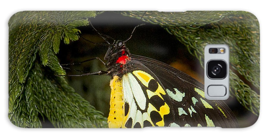 Butterfly: Animals Galaxy S8 Case featuring the photograph Framed by Jean Noren