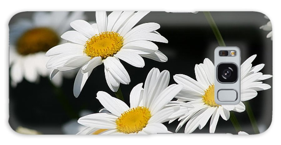 White Flower Galaxy S8 Case featuring the photograph Fresh As by Kim Hojnacki