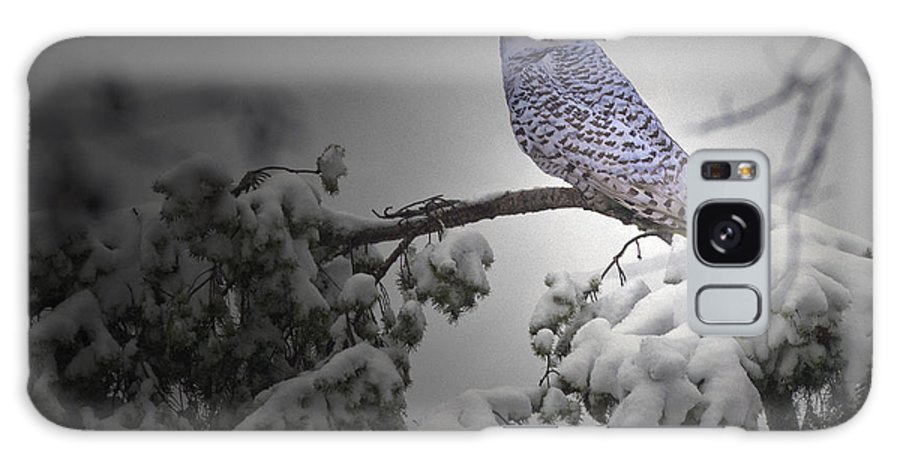 Snow Owl Galaxy S8 Case featuring the photograph Fresh Snow by Rob Mclean