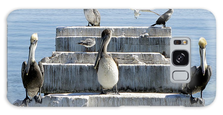 Pelican Galaxy S8 Case featuring the photograph Pelican Friends by Bob Slitzan