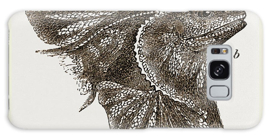 Frilled Lizard Galaxy S8 Case featuring the drawing Frilled Lizard by Litz Collection