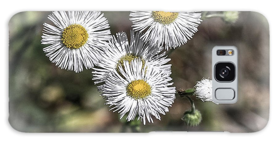 Wildflowers Galaxy S8 Case featuring the photograph Fringed Daisy by Grace Grogan
