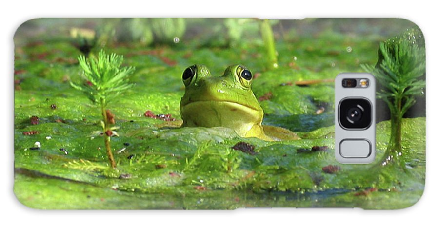 Frog Galaxy S8 Case featuring the photograph Frog by Douglas Stucky
