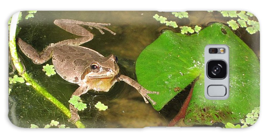 Frog Galaxy S8 Case featuring the photograph Frog Grabs Water Lily by Deanne Rotta