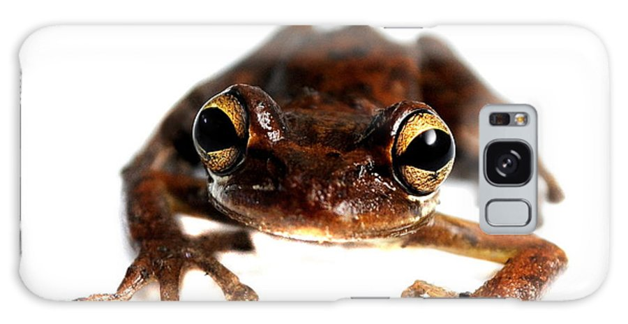 Frog Galaxy S8 Case featuring the photograph Frog by Nathan Abbott