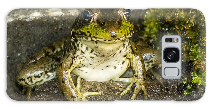 Frog Galaxy S8 Case featuring the photograph Frog Pose by Richard Kitchen