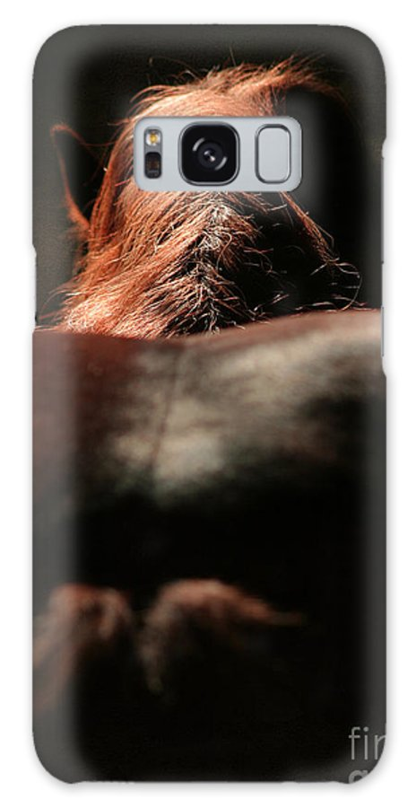 Horse Galaxy S8 Case featuring the photograph From The Back by Angel Ciesniarska