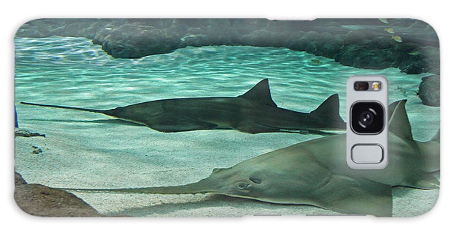 Sharks Galaxy S8 Case featuring the photograph From The Deep - Sawtooth Ray Sharks by Suzanne Gaff
