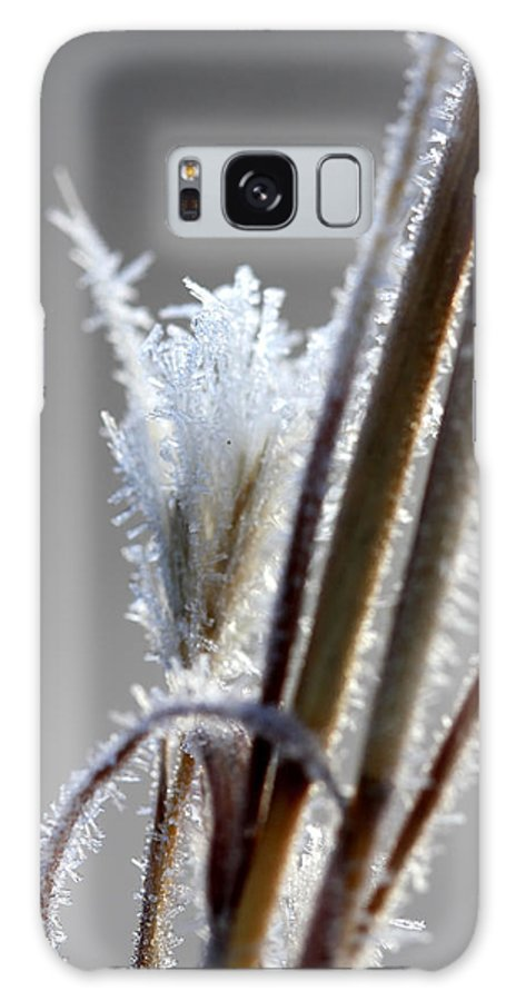 Frosty Plants Galaxy S8 Case featuring the photograph Frost 20131226-115 by Carolyn Fletcher
