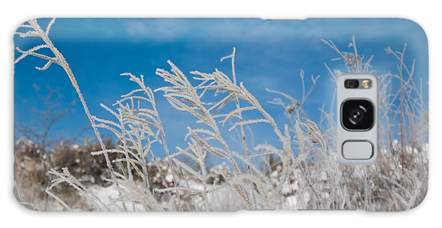 Frost Galaxy S8 Case featuring the photograph Frost Covered Grasses Against The Sky by Cascade Colors
