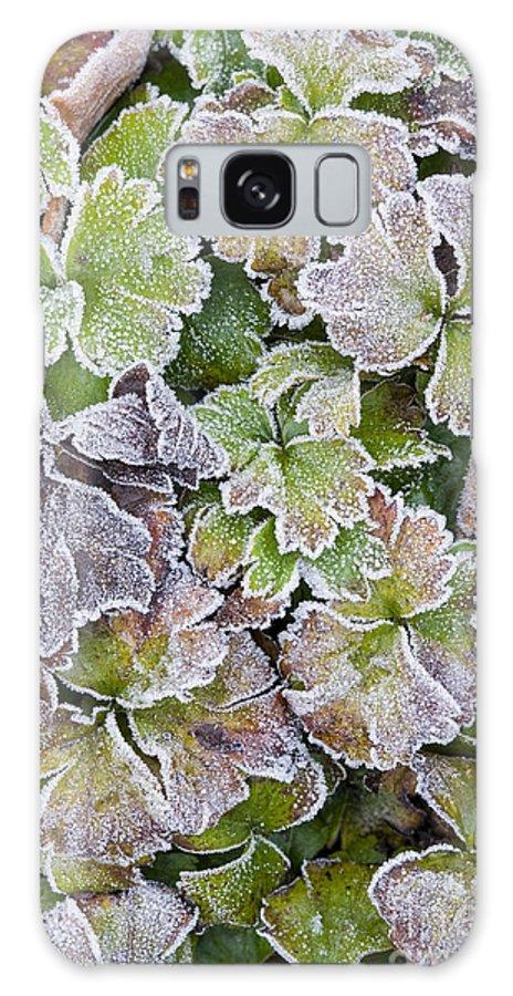 Waldsteinia Ternata Galaxy S8 Case featuring the photograph Frost On Waldsteinia Leaves. by Geoff Kidd