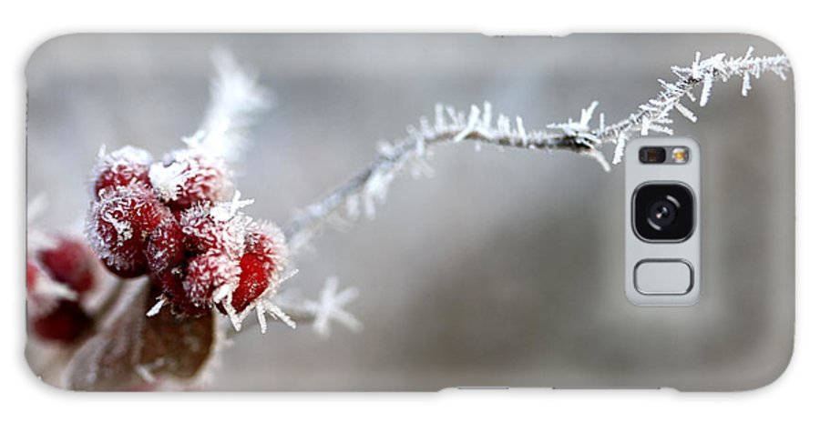 Berries Galaxy S8 Case featuring the photograph Frosty Berries by Carolyn Fletcher