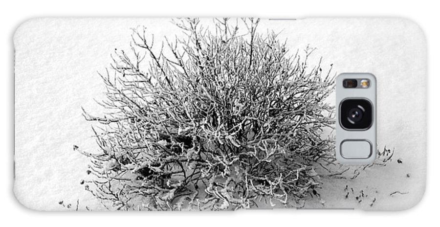 Bush Galaxy S8 Case featuring the photograph Frozen Bush by Sophie Vigneault