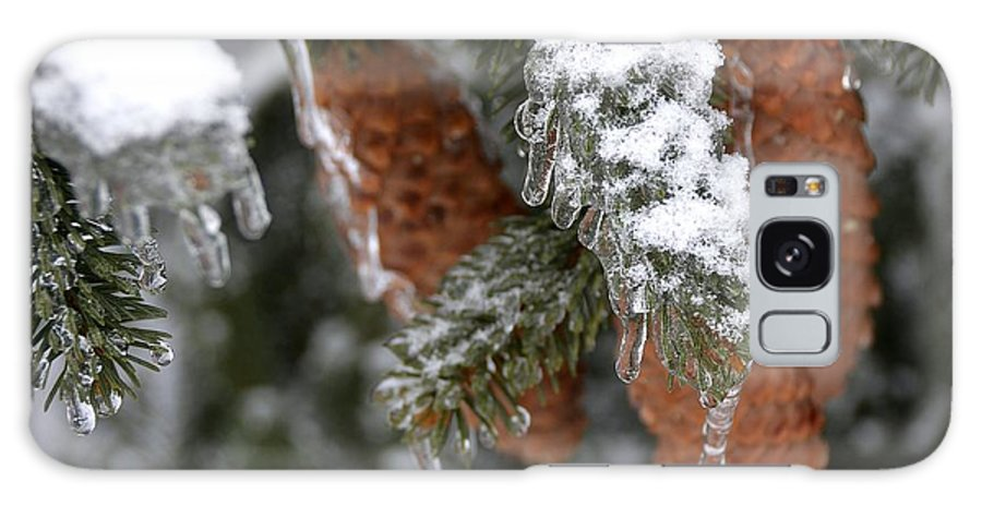 Pine Tree In Winter Galaxy S8 Case featuring the photograph Frozen Pine Tree by Dave Zuker