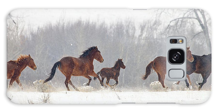 Mustangs Galaxy S8 Case featuring the photograph Frozen Track by Mike Dawson
