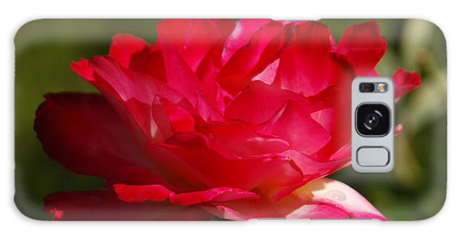 Floral Galaxy Case featuring the photograph Fuchsia by Suzanne Gaff