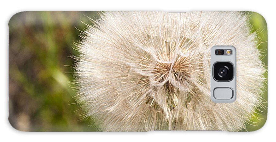 Bernheim Forest Kentucky Dandelion Dandelions Plant Plants Weed Weeds Galaxy S8 Case featuring the photograph Full Bloom by Bob Phillips