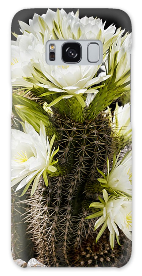 Full Bloom Galaxy S8 Case featuring the photograph Full Bloom by Kelley King