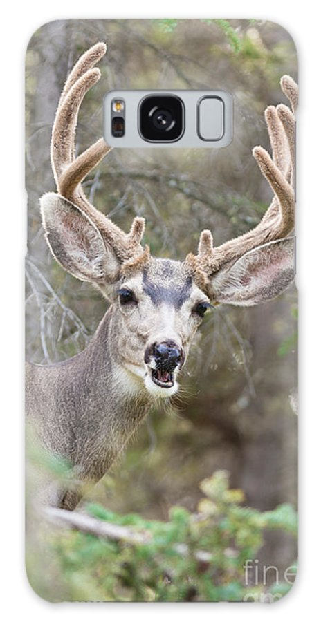 Adult Galaxy S8 Case featuring the photograph Funny Mule Deer Buck Portrait With Velvet Antler by Stephan Pietzko
