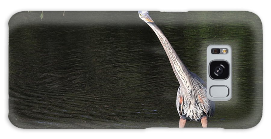 Blue Heron Galaxy S8 Case featuring the photograph Funny Pose by Cindy Reilley