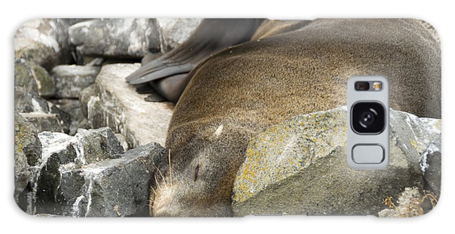 Fur Seal Galaxy S8 Case featuring the photograph Fur Seal by Milena Boeva