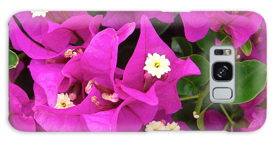 Galaxy S8 Case featuring the photograph Fuschia Flowers by Elizabeth-Anne King