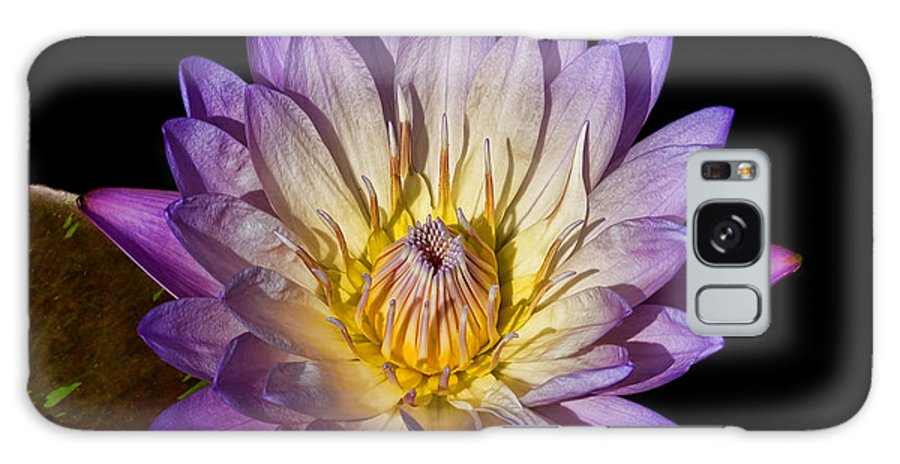Lily Lilypad Purple Fuscia Yellow Water Flower Garden Pond Green Galaxy S8 Case featuring the photograph Fuscia Water Lily by Patton Imagery