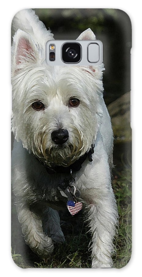 Dog Galaxy S8 Case featuring the photograph Fuzzy by Karol Livote