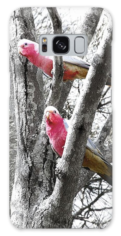 Parrots Galaxy S8 Case featuring the photograph Galahs In A Tree by Pierre Roux