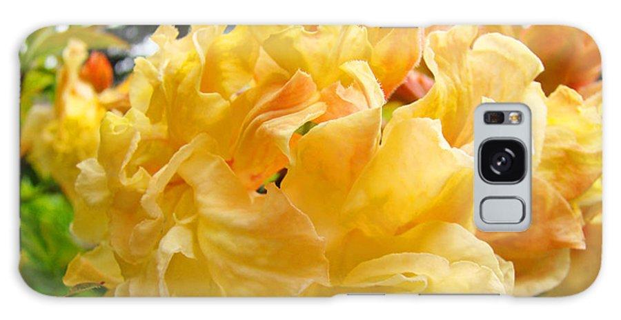 Rhodies Galaxy S8 Case featuring the photograph Gallery Fine Art Prints Yellow Orange Rhodies by Baslee Troutman
