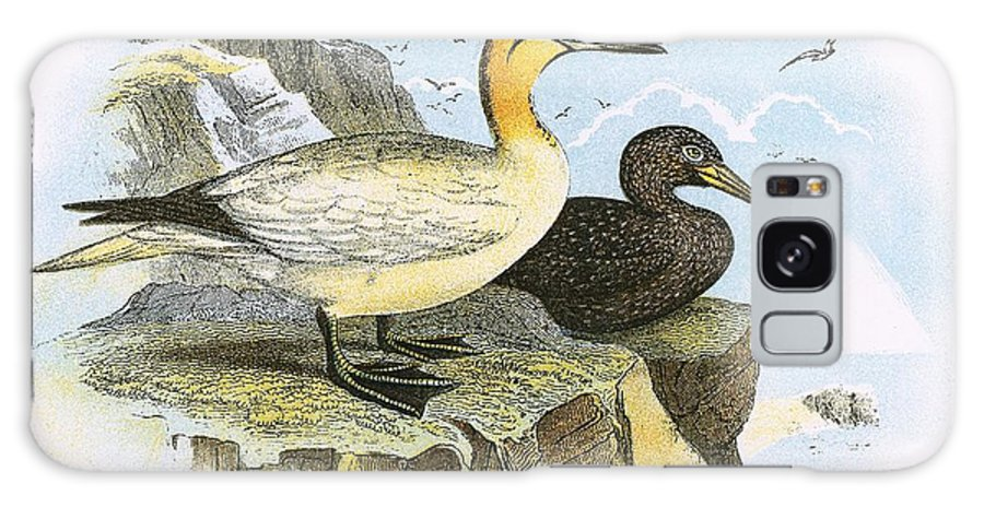British Birds Galaxy S8 Case featuring the photograph Gannet by English School