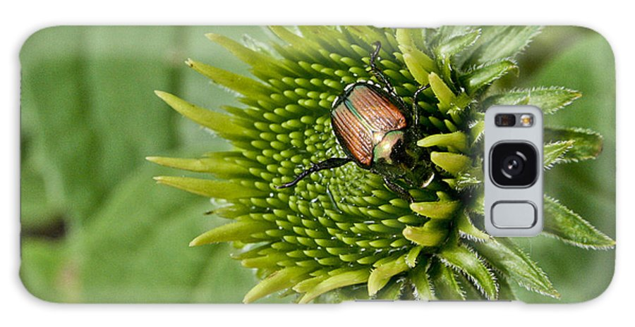 Beetle Galaxy S8 Case featuring the photograph Garden Beetle by Justin Bopp