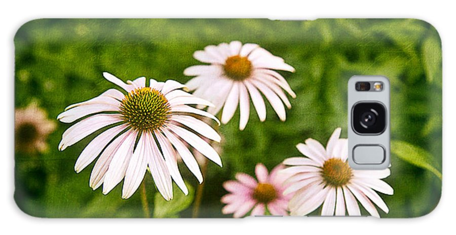 Arrangement Galaxy S8 Case featuring the photograph Garden Dasies by Tom Mc Nemar