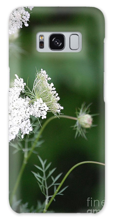 First Star Art Galaxy S8 Case featuring the photograph Garden Lace Group By Jammer by First Star Art
