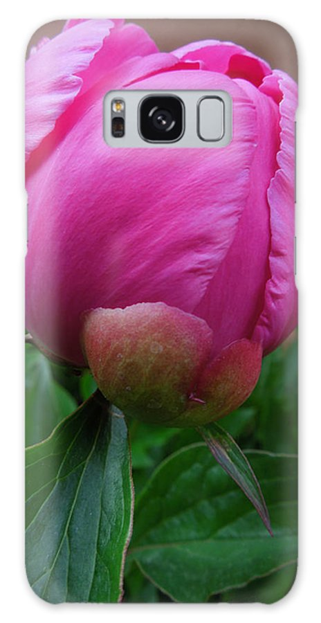 Colette Galaxy S8 Case featuring the photograph Garden Peony June Joy by Colette V Hera Guggenheim