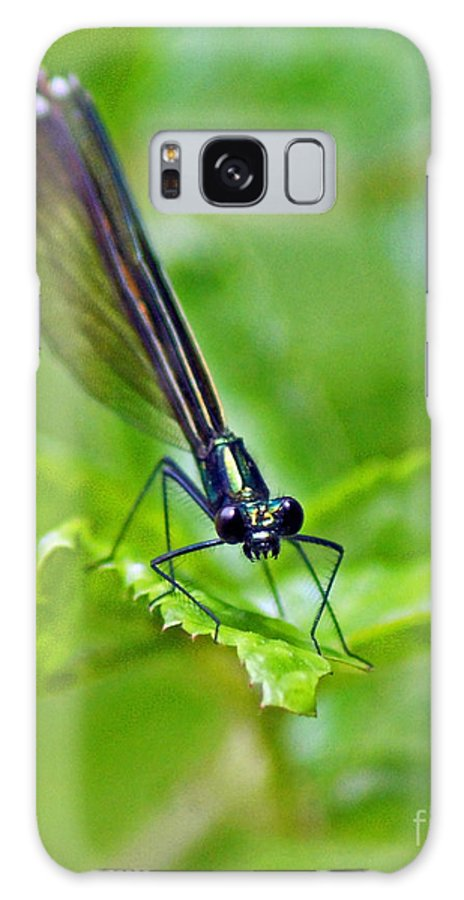Insect Galaxy S8 Case featuring the photograph Garden Poser by Joe Geraci
