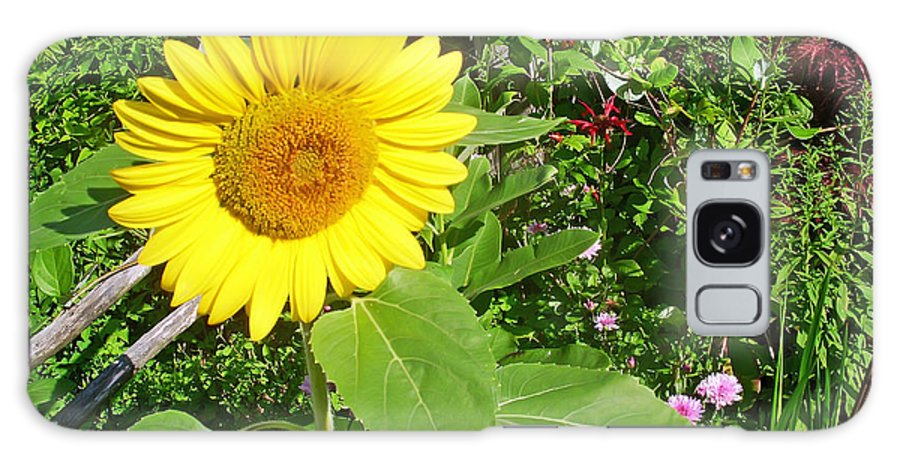 Flower Galaxy S8 Case featuring the photograph Garden Sunflower by Aimee L Maher ALM GALLERY