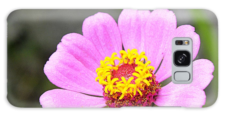 Flower Galaxy S8 Case featuring the photograph Garishly Colourful by Kedar Munshi