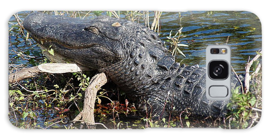 Alligator Gator Everglades National Park Florida Galaxy S8 Case featuring the photograph Gator On A Stick by John Wall
