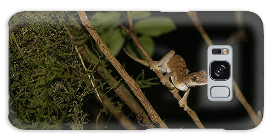 Nature Galaxy S8 Case featuring the photograph Gecko In The Night by Rudi Prott