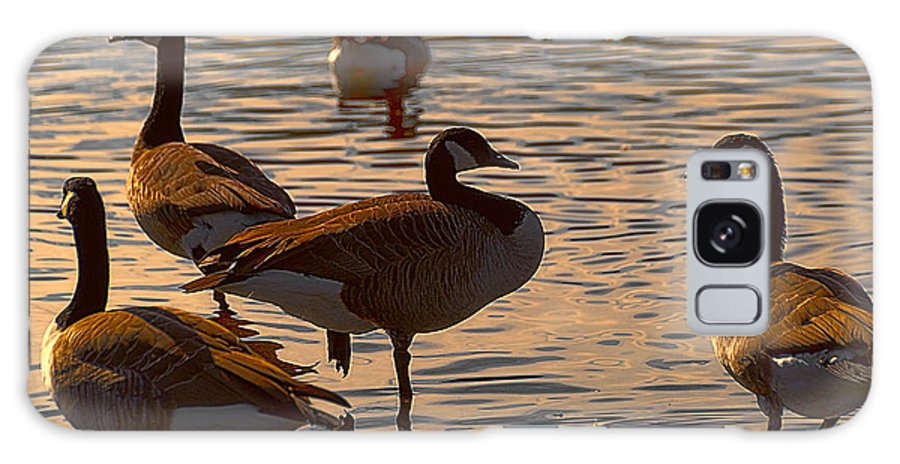 Geese Galaxy S8 Case featuring the photograph Geese At Sunset by Ted Guhl