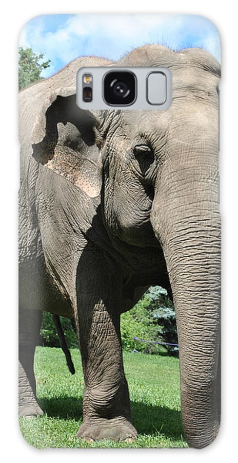 Galaxy S8 Case featuring the photograph Gentle Giant by Jim Hogg