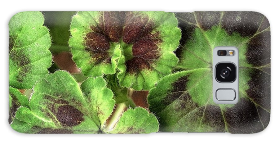 Leaves Galaxy S8 Case featuring the photograph Geranium Leaves by Ellen Cotton