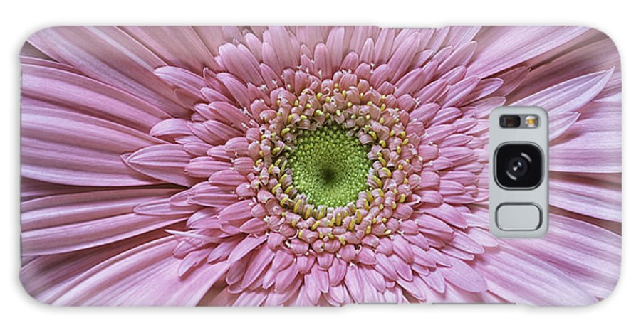 Flower Galaxy S8 Case featuring the photograph Gerber Daisy by Fran Gallogly