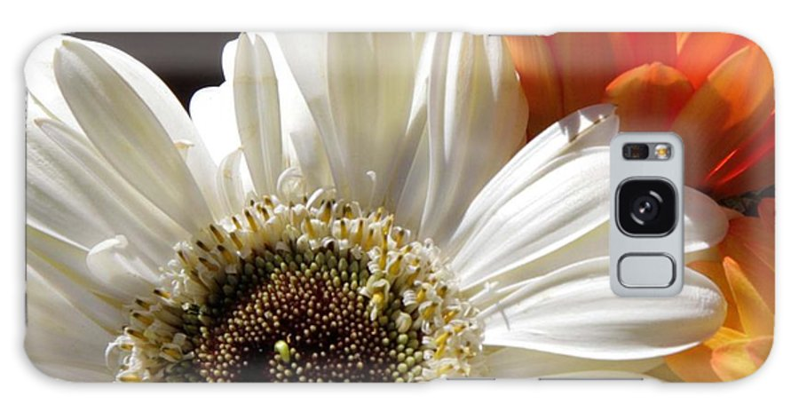 Gerber Daisy Galaxy S8 Case featuring the photograph Gerber Trio by Natalie Rotman Cote