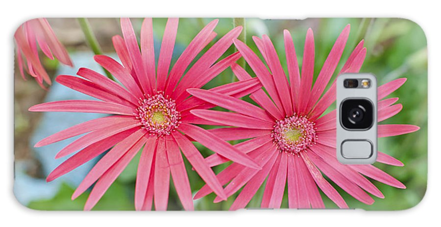 Flower Galaxy S8 Case featuring the photograph Gerbera Jamesonii / Pink Daisy Flowers by Image World