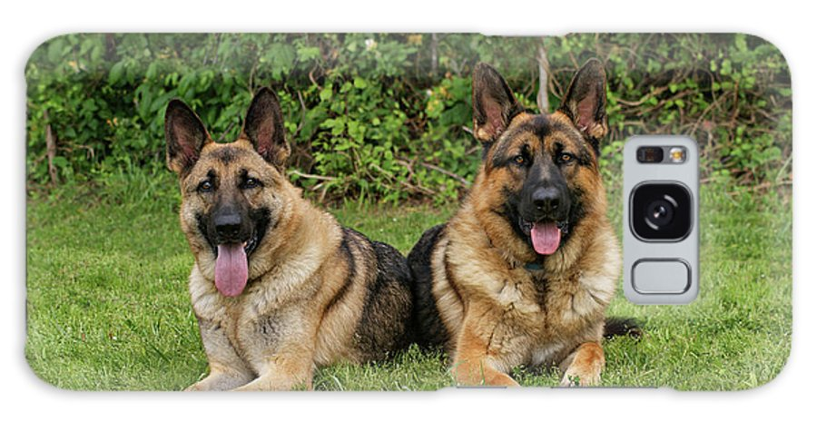 German Shepherd Galaxy S8 Case featuring the photograph German Shepherds - Mother And Son by Sandy Keeton
