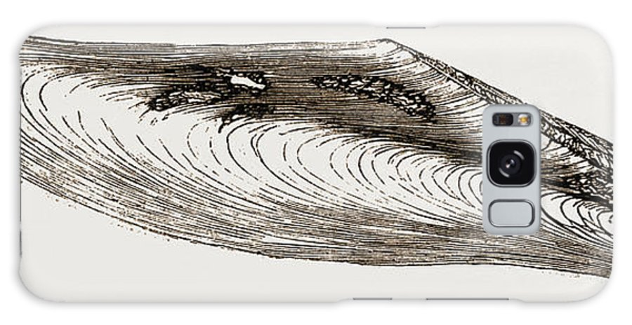 Gervillia Aviculoides Galaxy S8 Case featuring the drawing Gervillia Aviculoides by Litz Collection