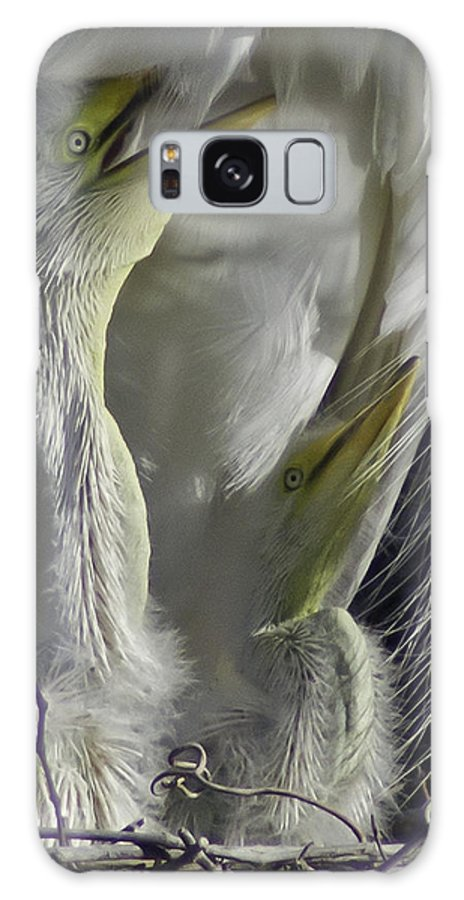 Birds Galaxy S8 Case featuring the photograph Getting Attention by James Ekstrom
