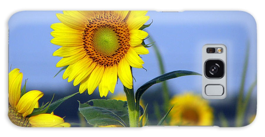 Sunflower Galaxy S8 Case featuring the photograph Getting To The Sun by Amanda Barcon